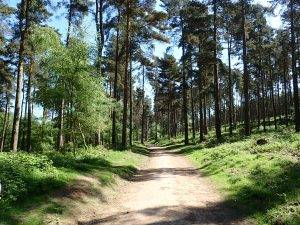 Human-Nature Escapes CIC | Cannock Chase 2