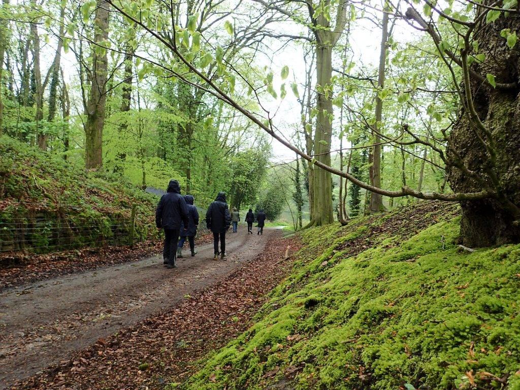 Human-Nature Escapes - Lawton Woods 1