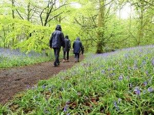 Human-Nature Escapes - Lawton Woods 7
