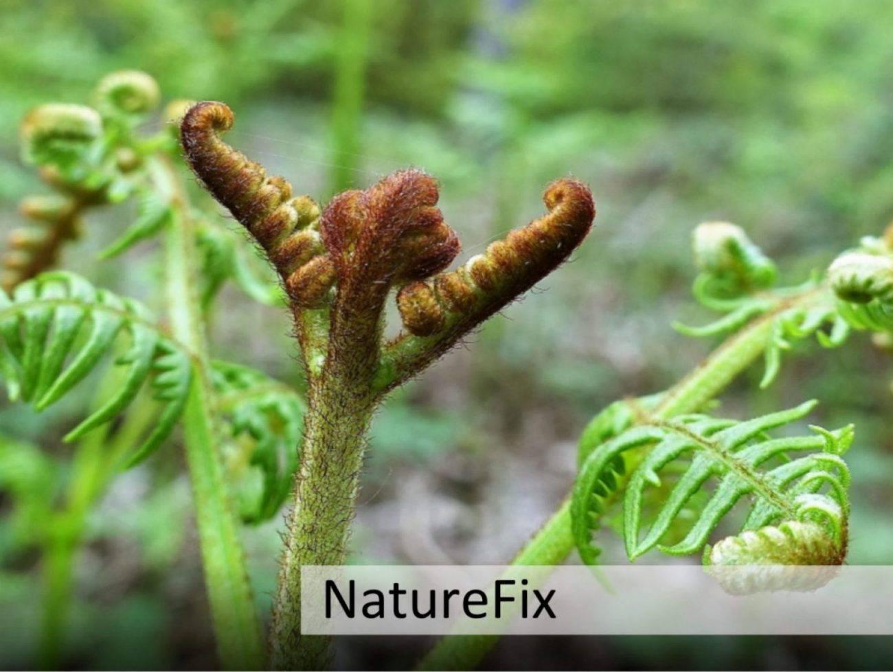 Human-Nature Escapes CIC - NatureFix