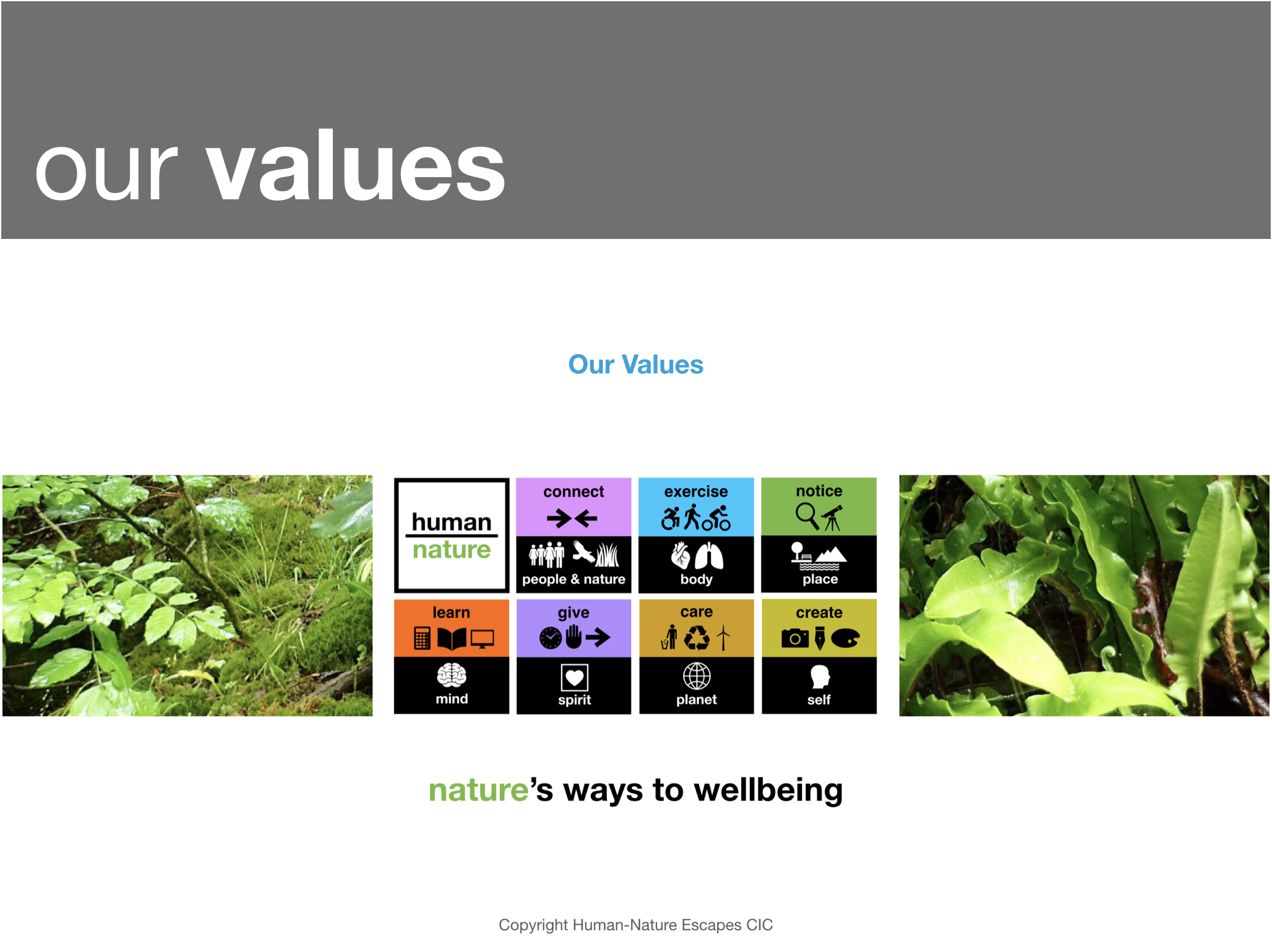 Human-Nature - Our Values